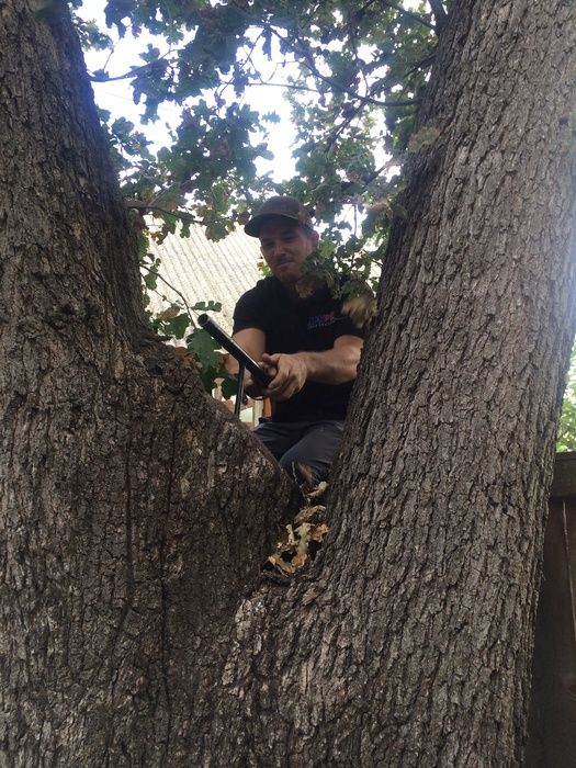 Arborist Testing for Tree Decay